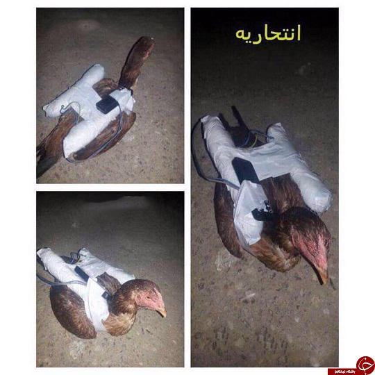 مرغ داعشی + عکس
